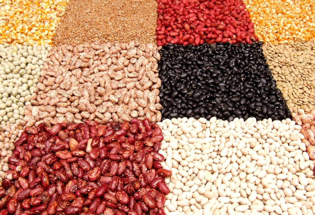 Beans are a good source of protein and therefore a good alternative to meat